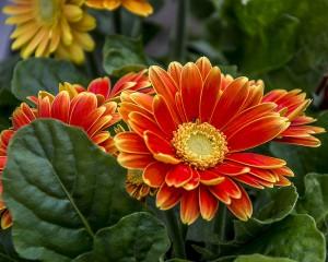 kwiatki wolne